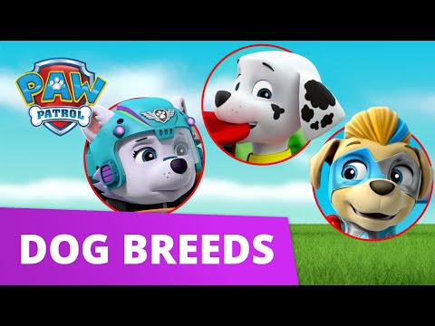 PAW Patrol Learn about Dog Breeds! | Learn with PAW Patrol | PAW Patrol Official & Friends