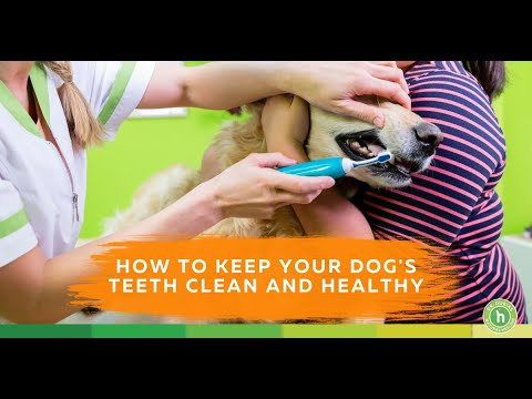 A Natural Approach to Dog Teeth Cleaning - Dental Care for your Dog | Dr. Peter Dobias