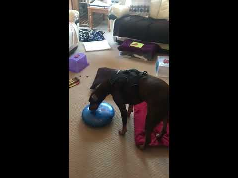 Free Work Enrichment for dogs - Toxa part 2