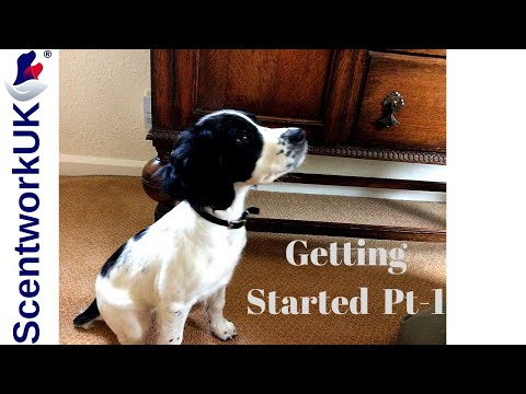 Scentwork - How to start 1