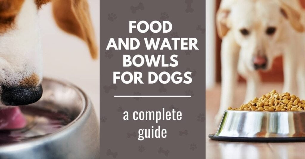 best food and water bowls for dogs