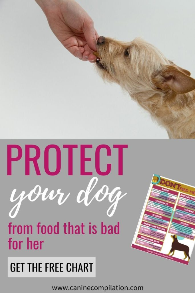 Protect your dog from food that is bad for her