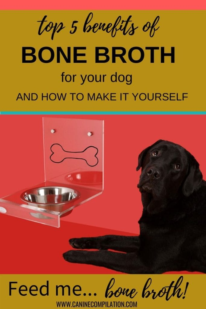 the benefits of bone broth for your dog