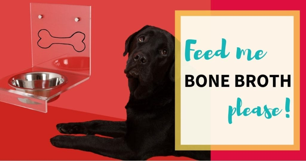 Photo of a dog and bowl with text: 'Feed me bone broth please!'