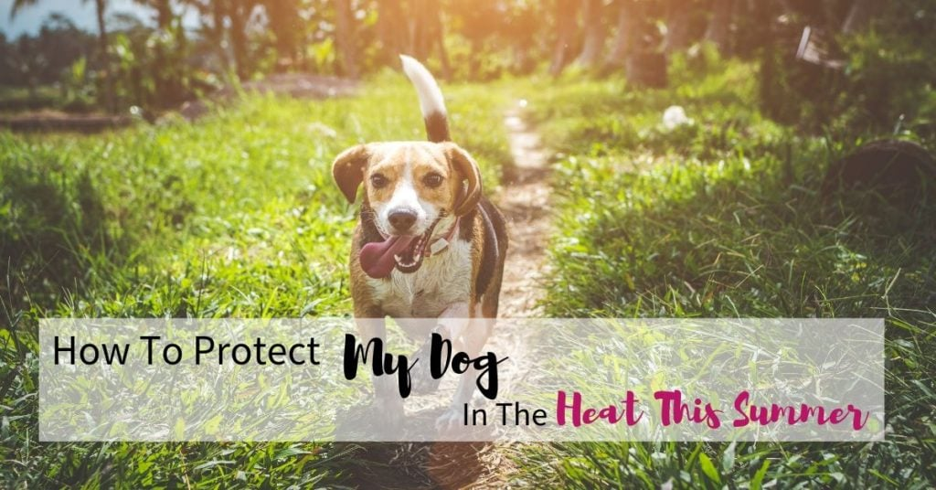 Photo of a dog panting with text reading 'How to protect my dog in the heat this summer'