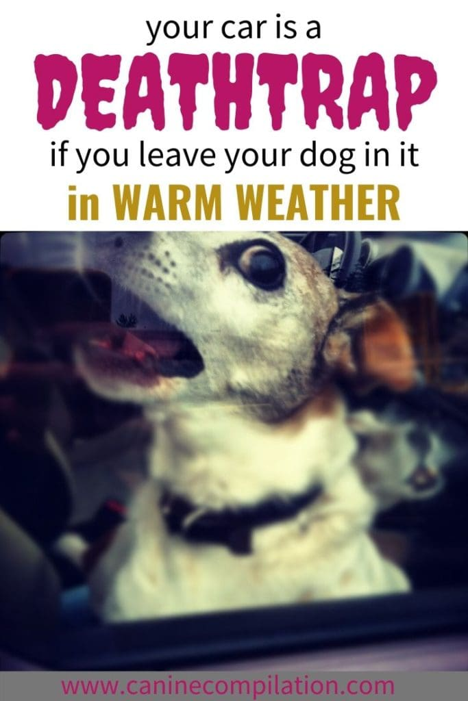Your car is a deathtrap to your dog in hot weather