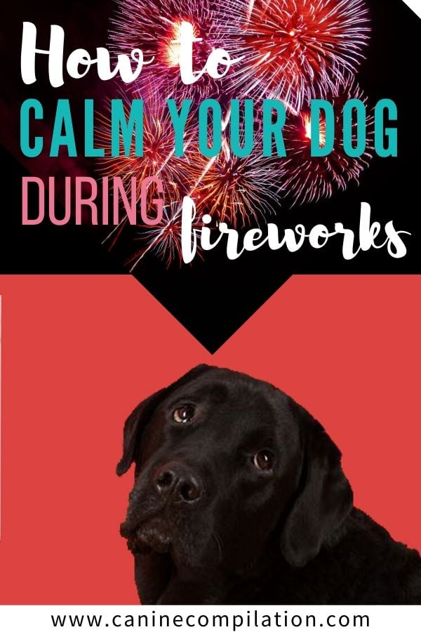 An action plan for how to calm your dog during fireworks. There are many things you can do to help your dog stay calm during fireworks. More dogs are lost during fireworks than any other time of year