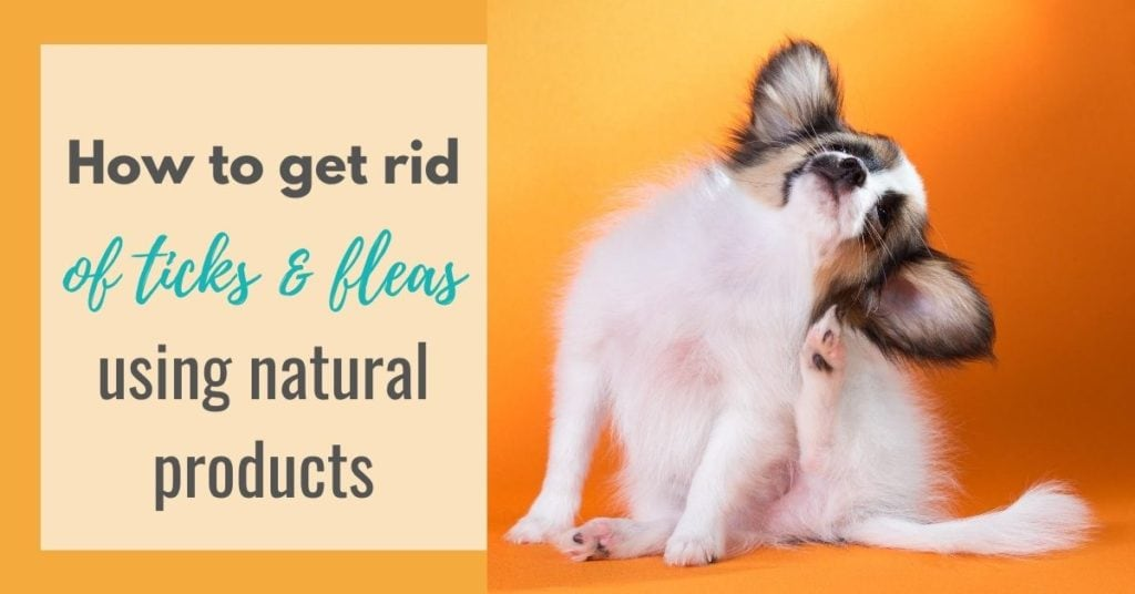 How to get rid of fleas on my dog using natural products