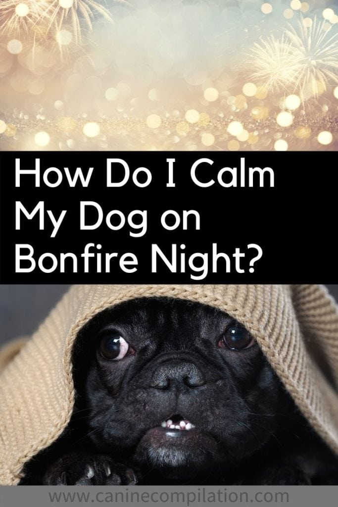 How do I calm my dog on bonfire night?