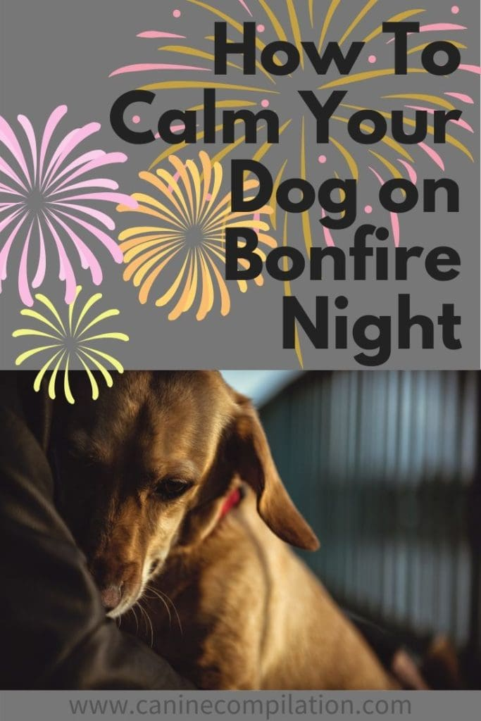 how to calm your dog on bonfire night