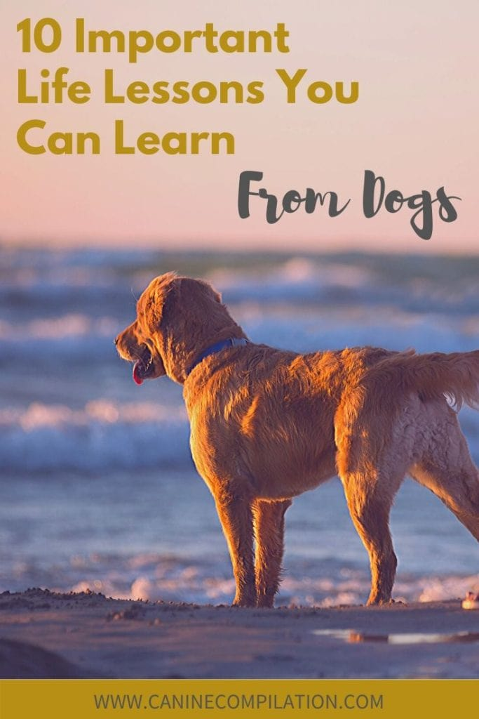 Important life lessons you can learn from your dog
