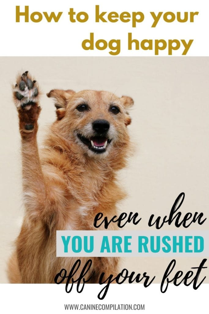 How to keep your dog happy even when you're rushed of your feet