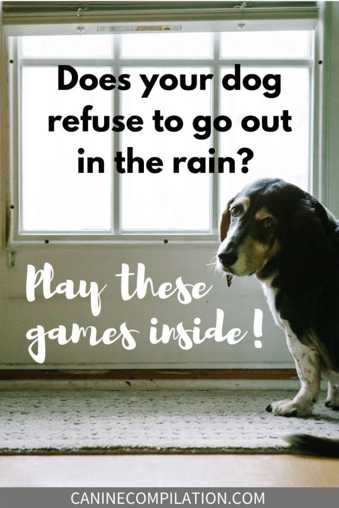 Does your Dog refuse to go out in the rain? Play these games inside