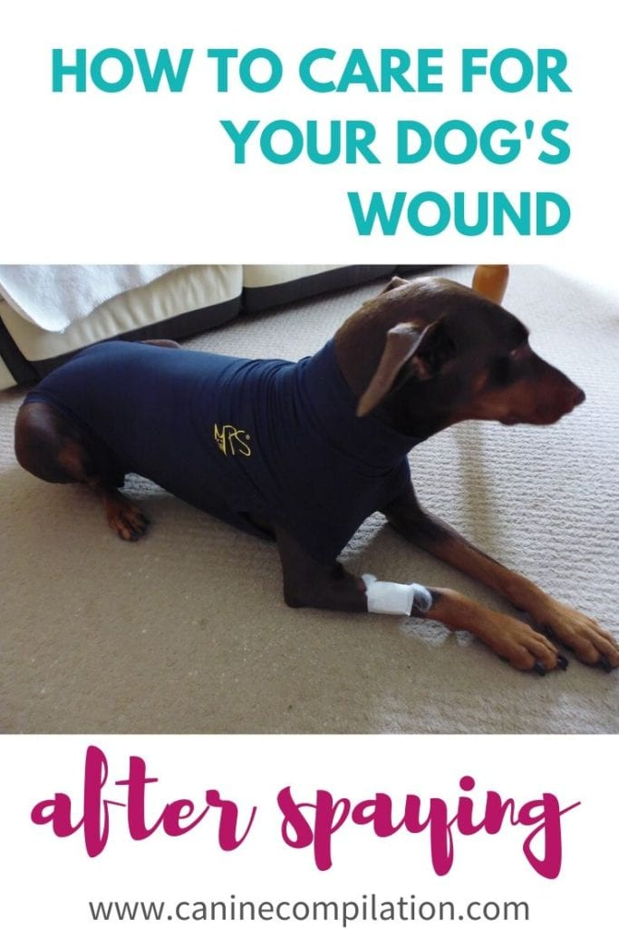 HOW TO KEEP YOUR DOG'S WOUND CLEAN AFTER SPAYING