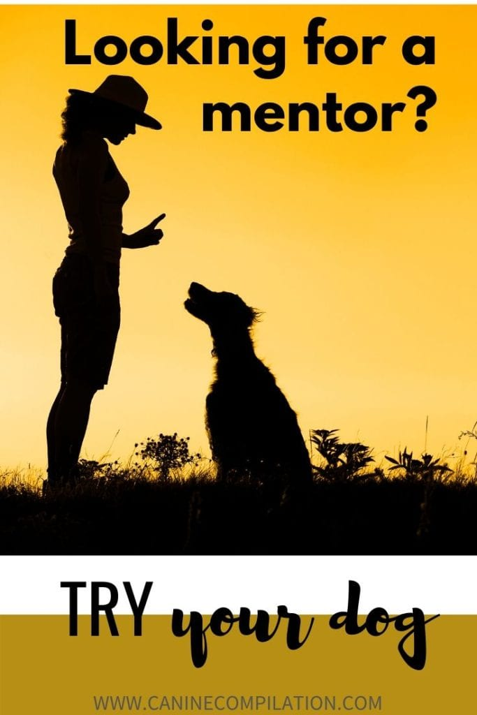 Looking for a mentor or life coach? Try your dog