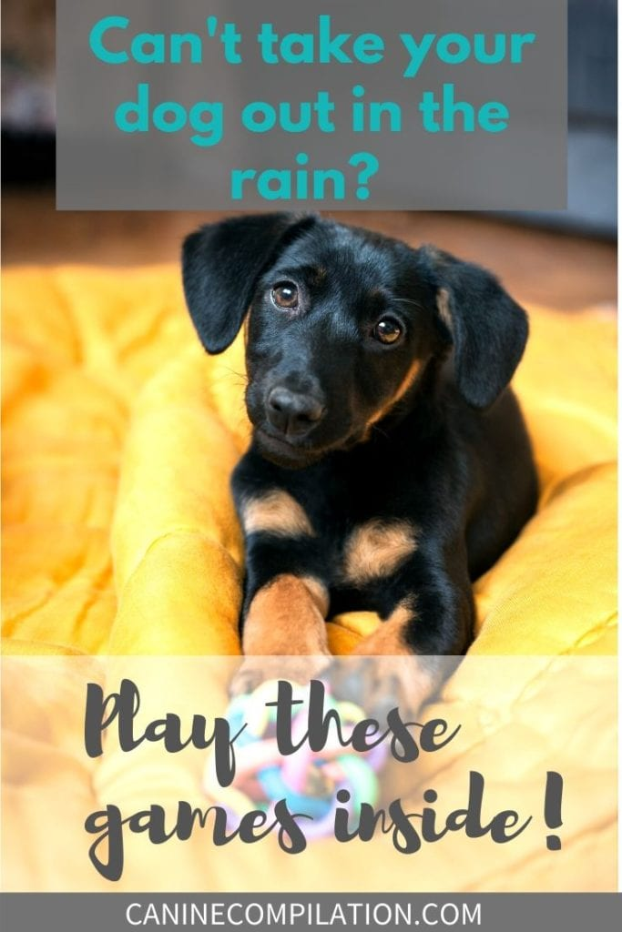 Can't take the dog out in the rain? Play these games inside