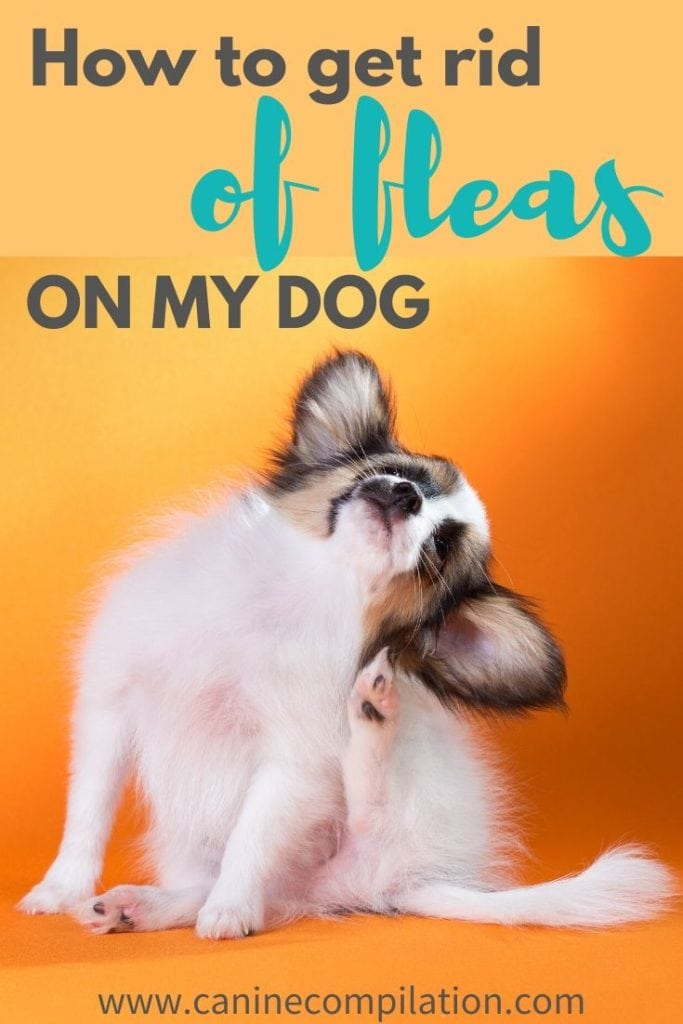 how to get rid of fleas on my dog