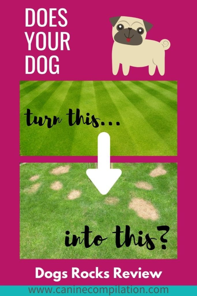 Does your dog leave urine burn marks on your lawn?