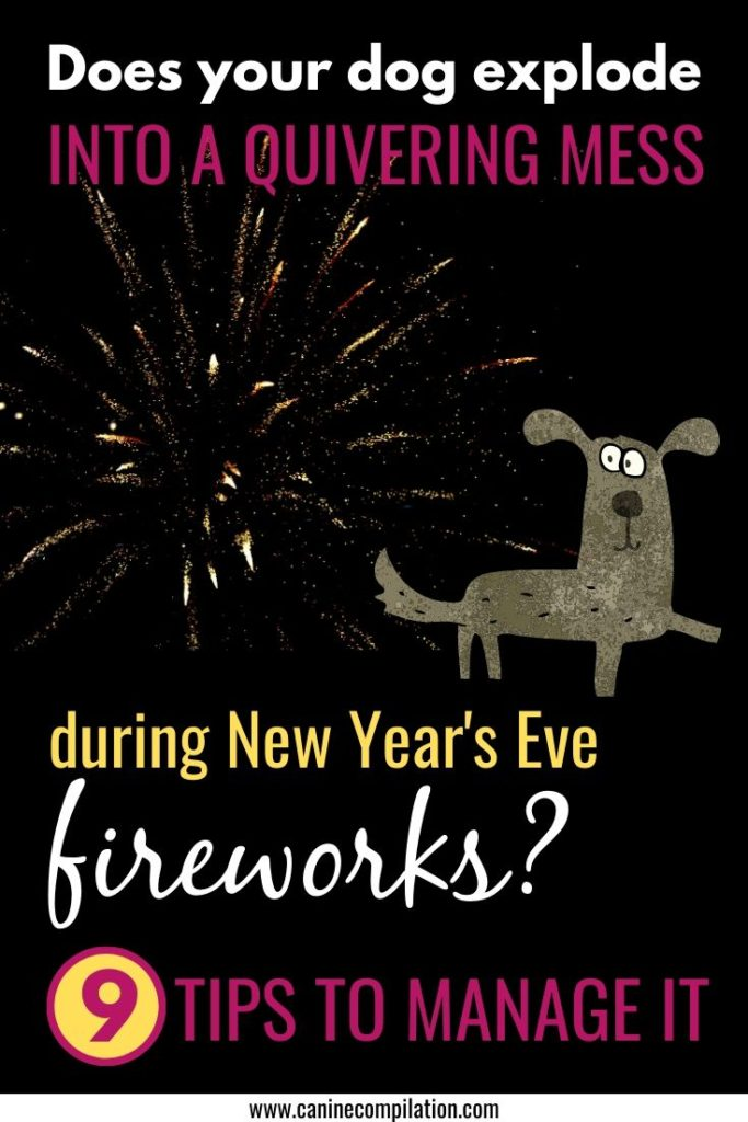 Does your dog explode into a quivering wreck during fireworks?