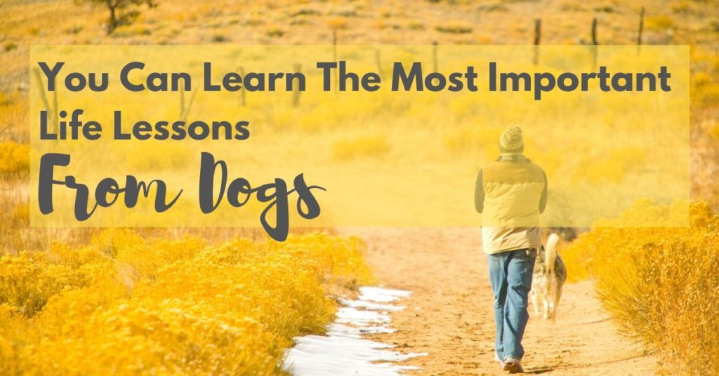 You can learn the most important lessons from dogs