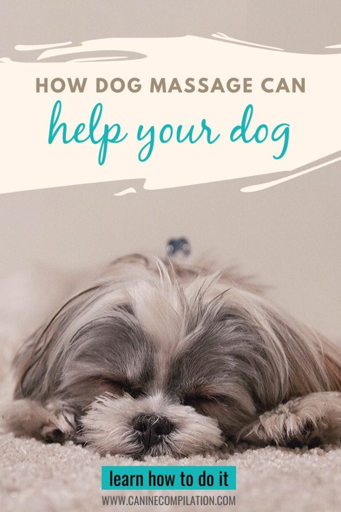 How Dog Massage Can Help Your Dog