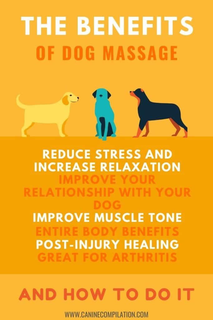 The Benefits Of Dog Massage