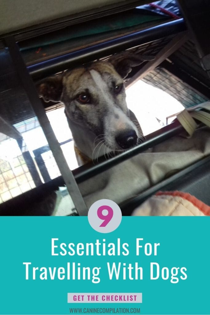 Image of dog, plus text: 9 essentials for travelling with dogs