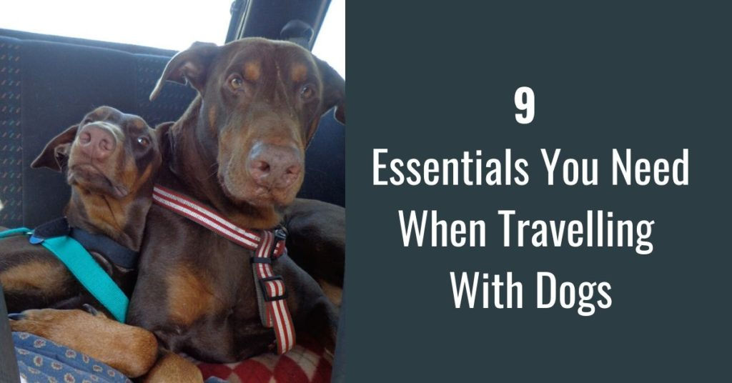 9 essentials you need when Travelling With Dogs