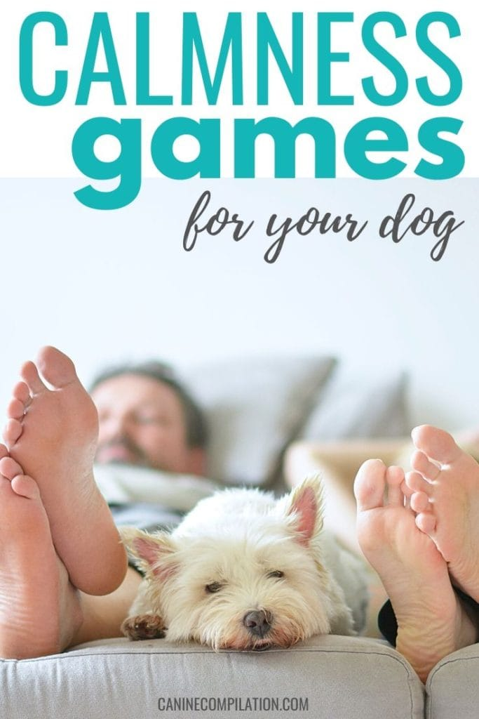 Calmness Games for your dog