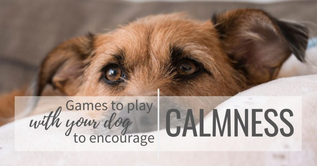 Games to play with your dog to encourage calmness