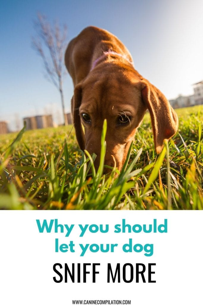 Re-think dog walking - does your dog get to sniff enough on its walk?
