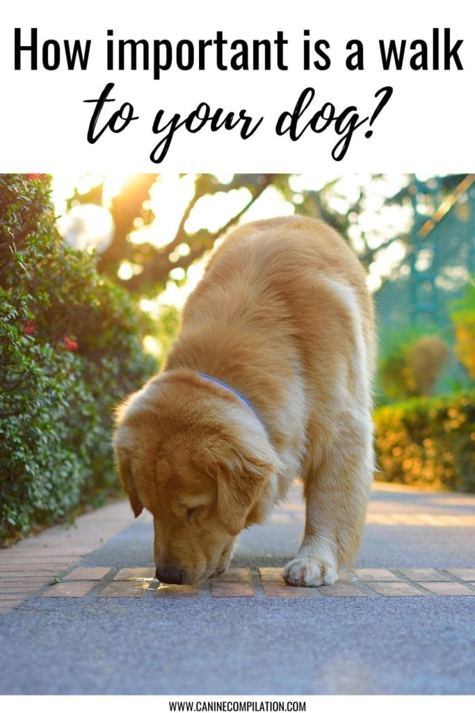 Re-think dog walking - does your dog get
