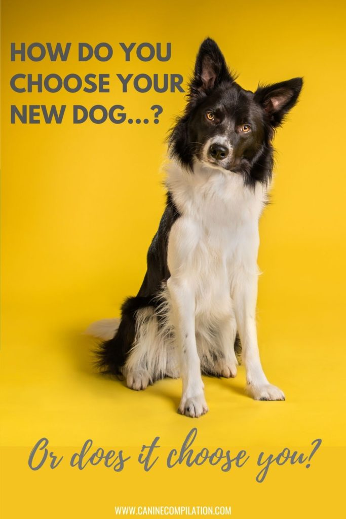 How do you choose your new dog, or does it choose you?