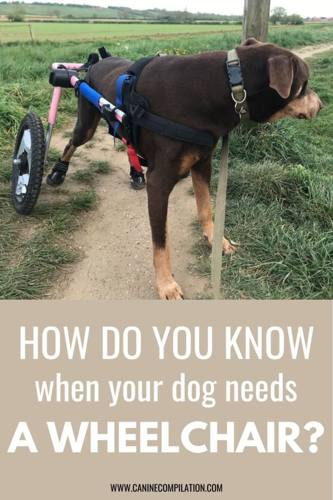 How do you know when your dog needs a wheelchair - 2 reviews