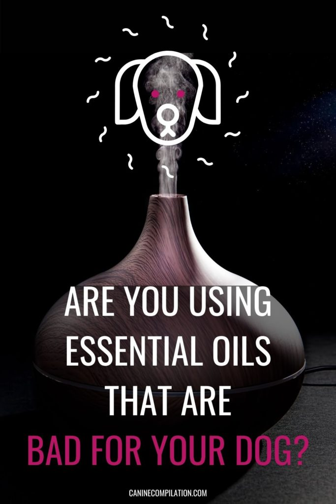 Are you using essential oils that are bad for your dog in your oil burner?