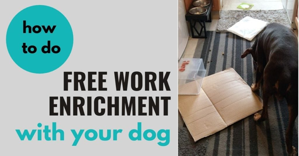 How To Do Free Work Enrichment For Dogs
