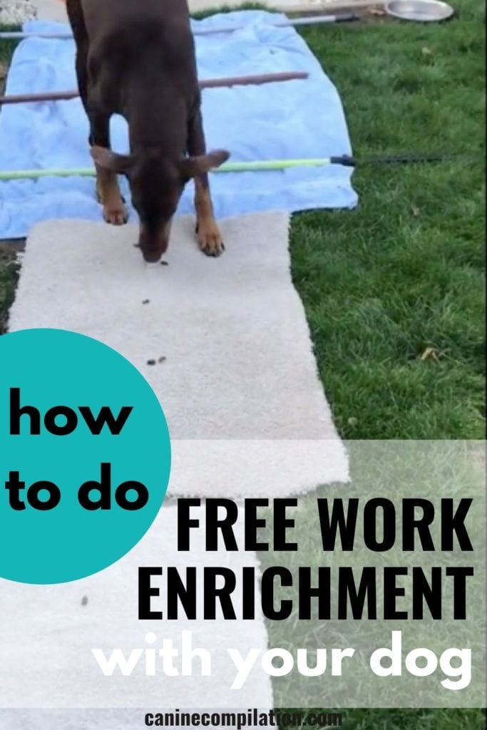 How to do ACE Free Work Enrichment with your dog