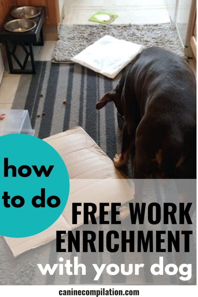 How to do Free Work Enrichment with your dog