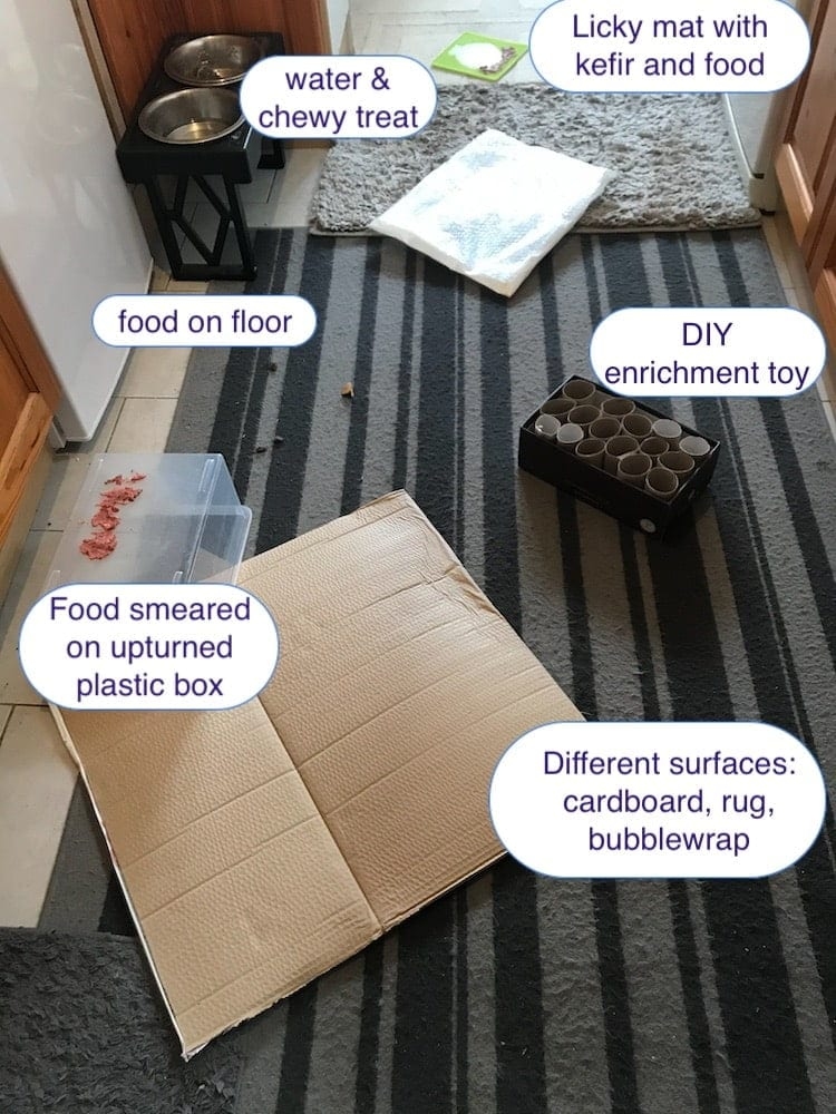simple suggested set up for Free Work enrichment for dogs
