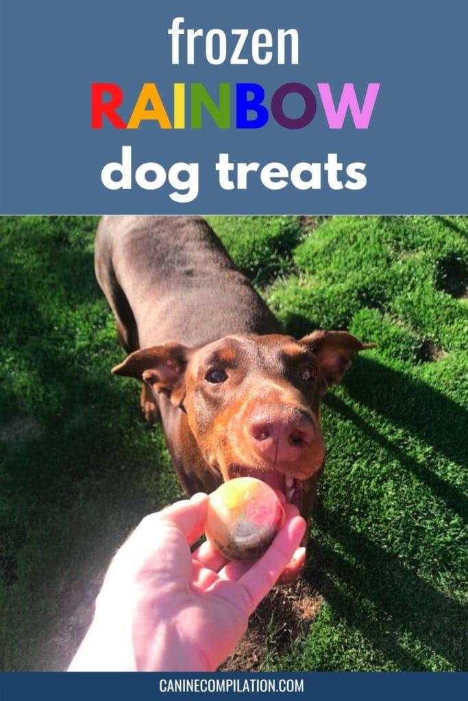 giving frozen rainbow dog treats to a dog