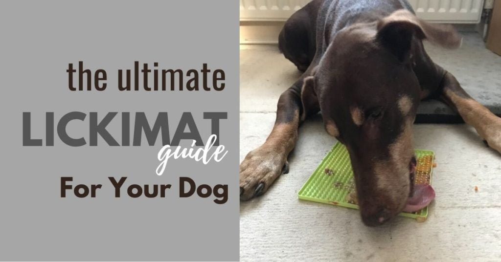 the ultimate lickimat guide for your dog - picture of dogs and lickimat