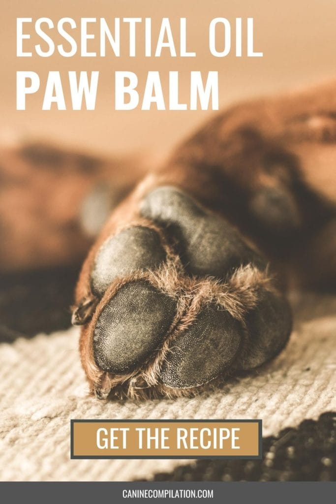 Essential oil paw balm - get the recipe, image of paw