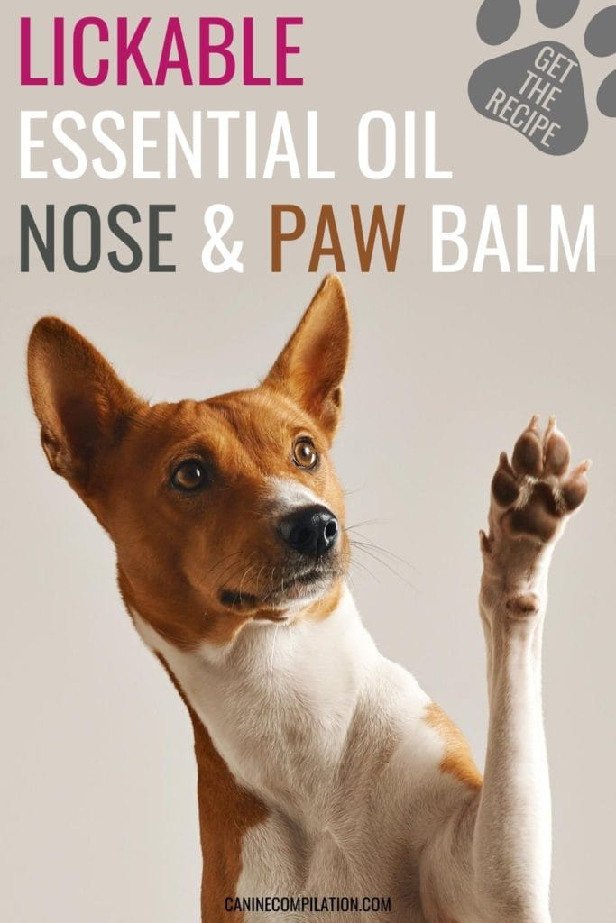 Lickable essential oil nose and paw balm, get the recipe