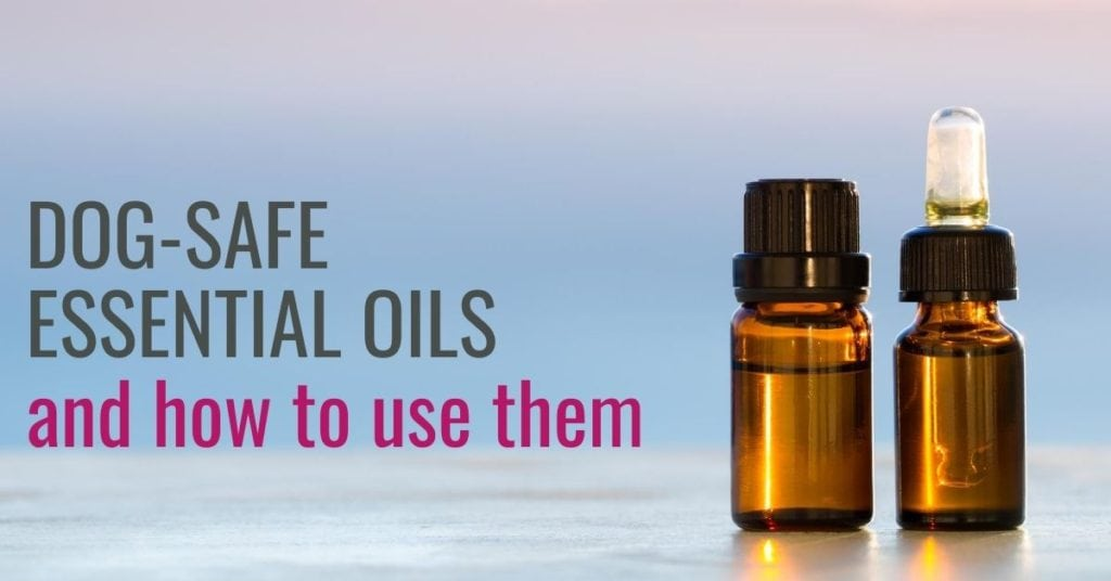 Image of oil and text -Essential oils that are good for dogs and how to use them