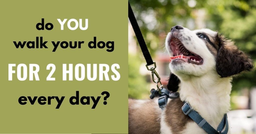 do you walk your dog for 2 hours every day?