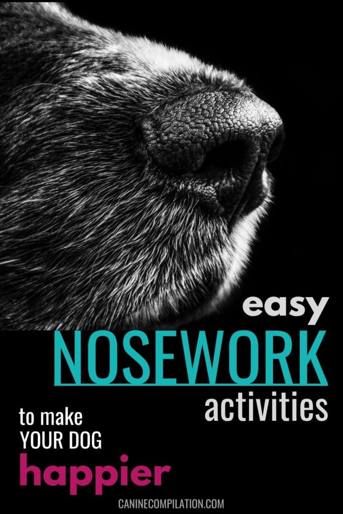 easy nosework activities to make your dog happier