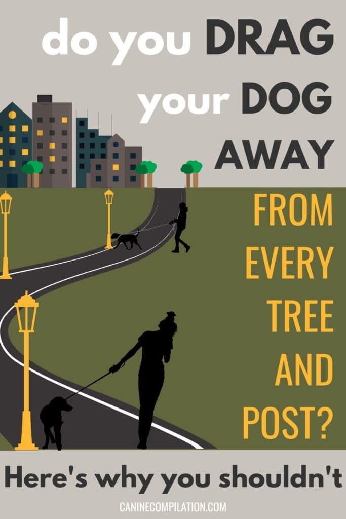 Do you drag your dog away from every tree and post? Here's why you shouldn't