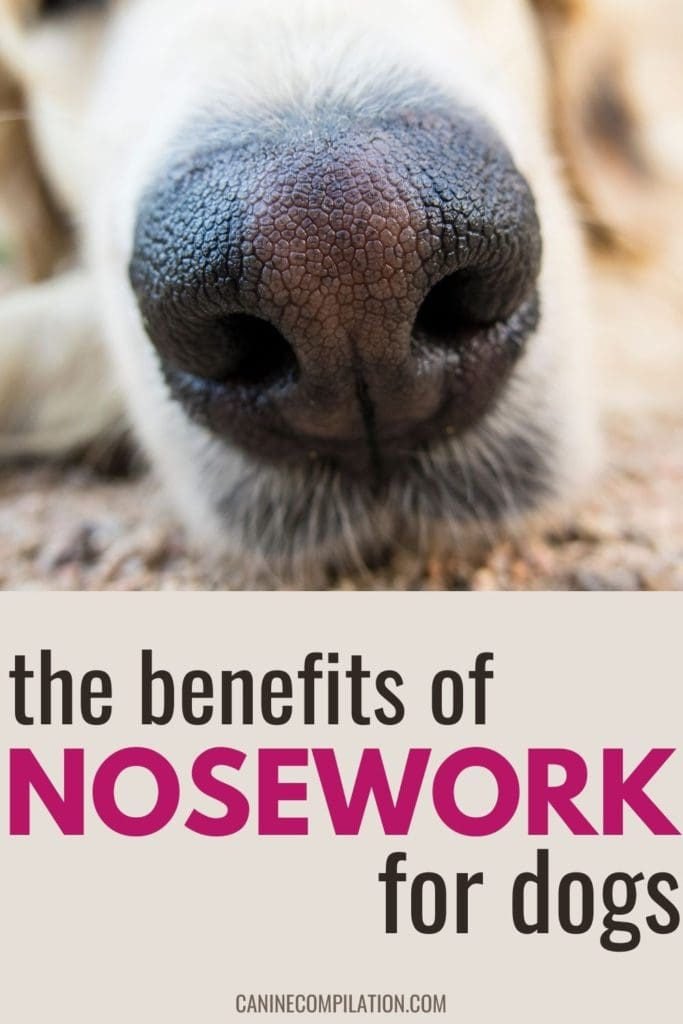 the benefits of nosework for dogs