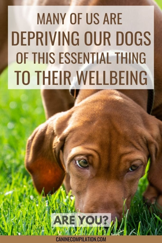 Many of us are depriving our dogs of this essential thing to their wellbeing - are you?