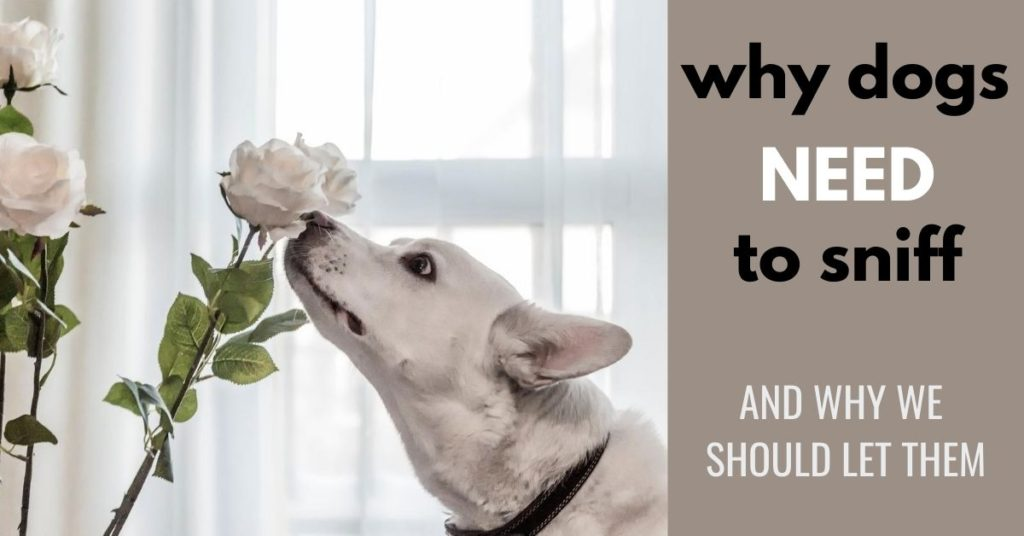 WHY dogs NEED to sniff AND WHY WE SHOULD LET THEM